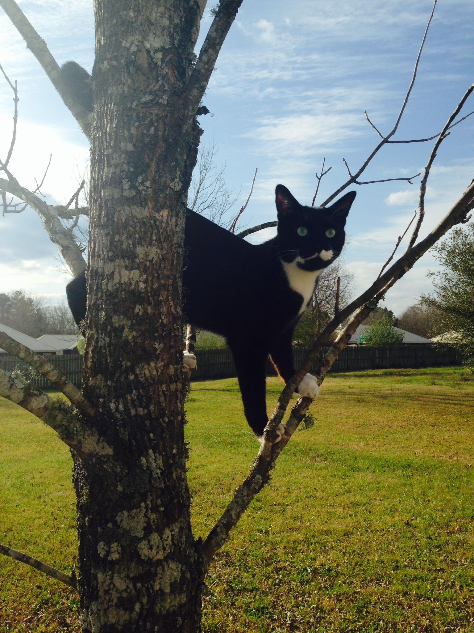 Jack Cat March 14